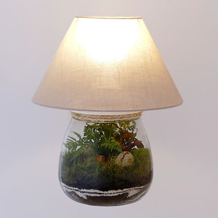 terrarium de plantes incroyable : c'est aussi une lampe !
