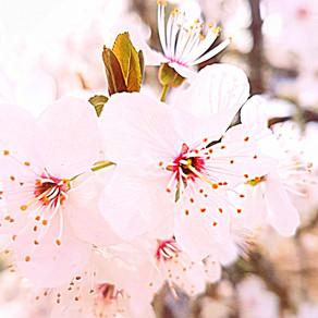 """L'odeur est l'intelligence des fleurs"""
