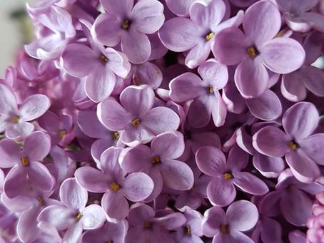 Ces délicieux parfums de fleurs sont-ils toujours naturels?