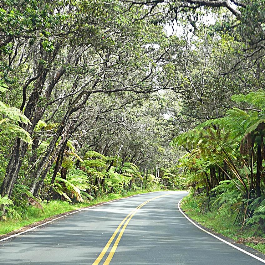 La route traverse la forêt tropicale...
