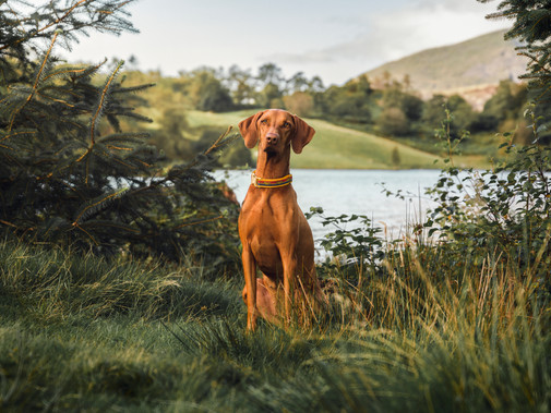 DOG WALKS IN THE LAKE DISTRICT
