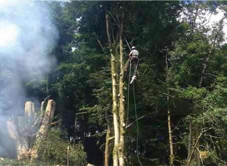 Watch us logging!