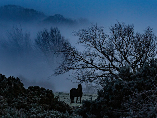 THE LONELY HORSE | MONDO GHECKO PHOTOGRAPHY