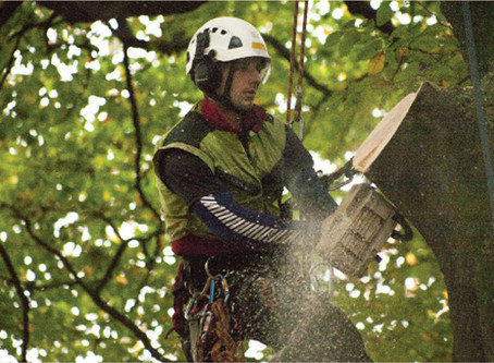 Watch us accessing trees!