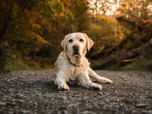 Oakhill Veterinary Group