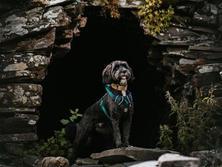 Paws Pet Photography