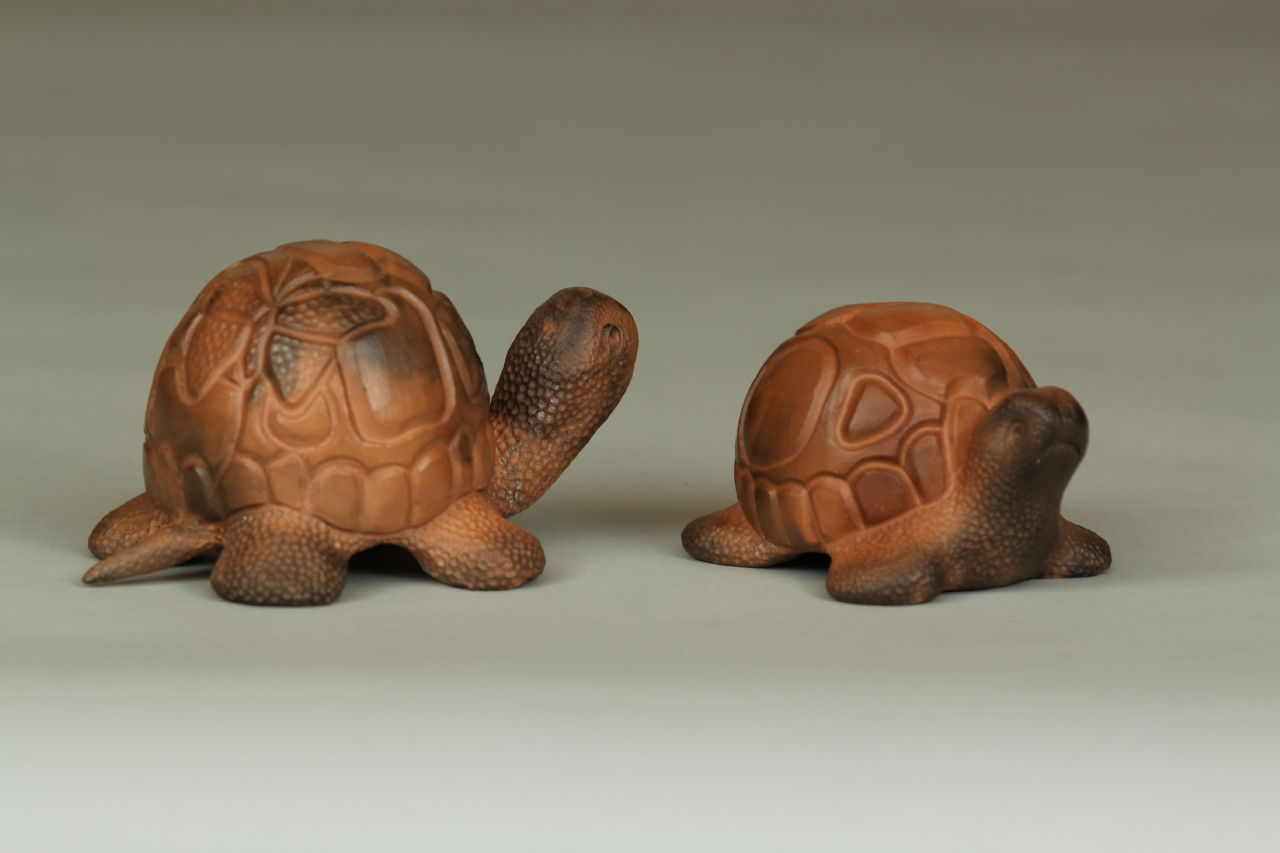 023_Small Turtles