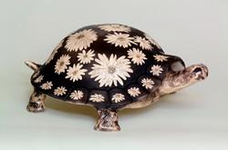 055-White daisy turtle