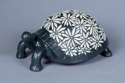 226- Daisy turtle