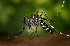 mosquito-49141_1920_edited.jpg