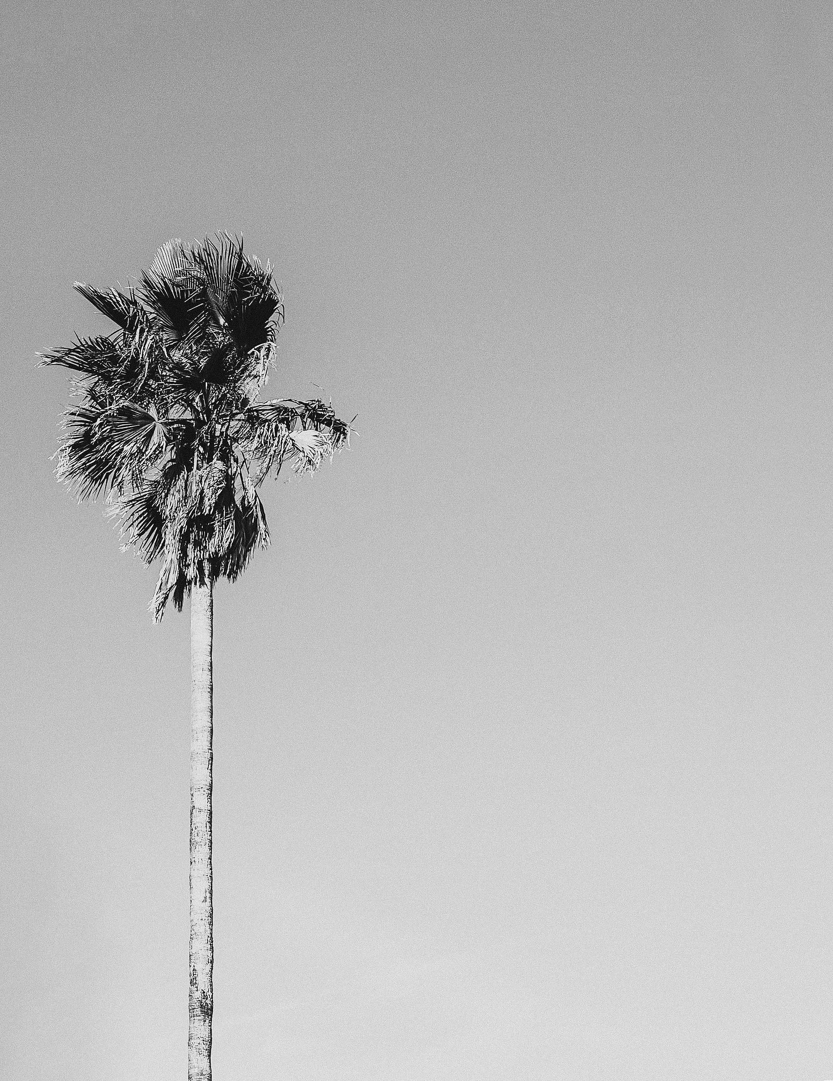 palmbw1-3.jpg