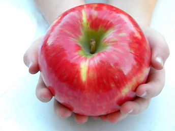 Biscay Orchards Honeycrisp Apple