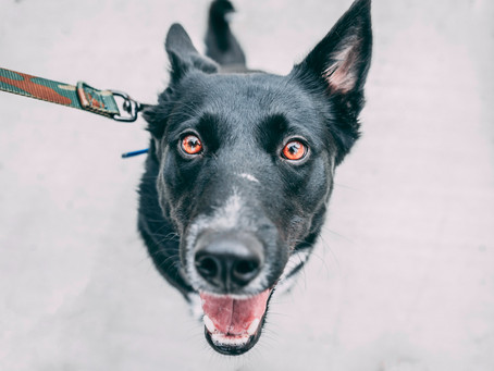 Hear From The Pet Pros: The Best Collars, Harnesses, and Leashes