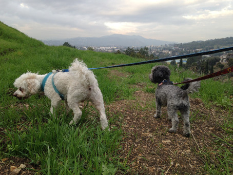 Stay Active With Your Dog In Los Angeles