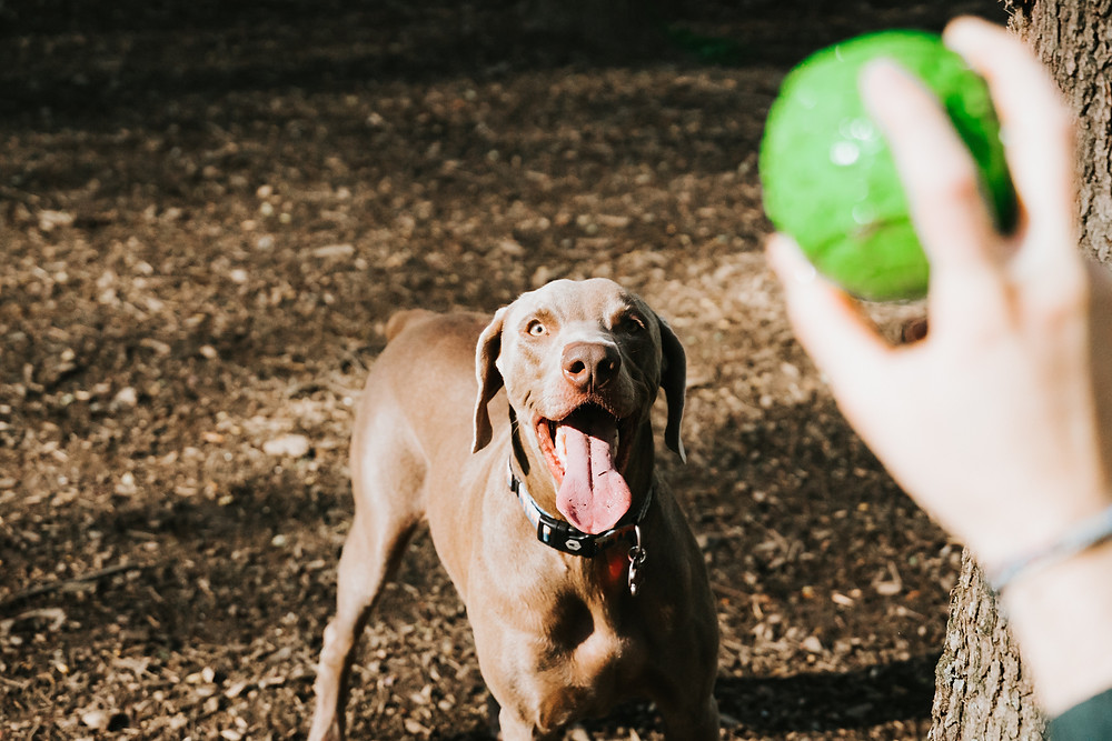 dog playing fetch at dog park in Los Angeles