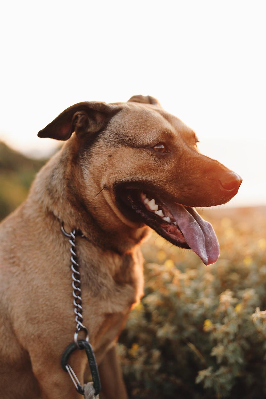 Los Angeles dog on dog-friendly hike