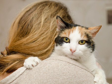 7 Ways To Show Your Pet Love