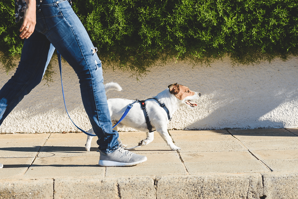 professional pet sitter in Los Angeles, CA