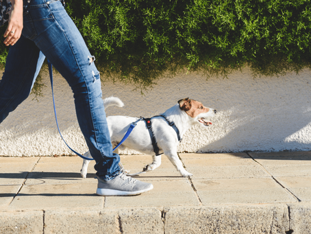 What It's Like Using A Professional Pet Sitter