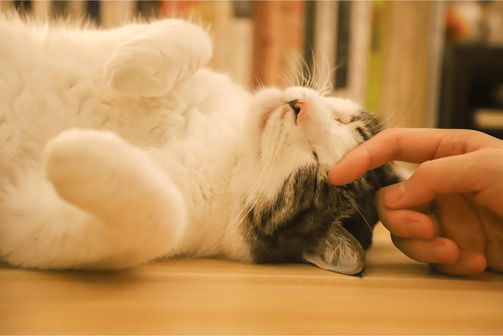 professional pet sitter petting cat