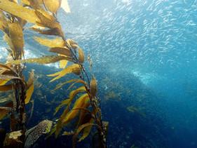 Upwelling: Ecological Memory on the Coast