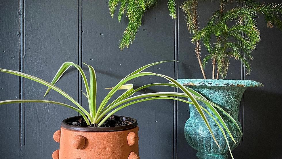 Beaded Terracotta Planter