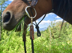 Training a rescue horse