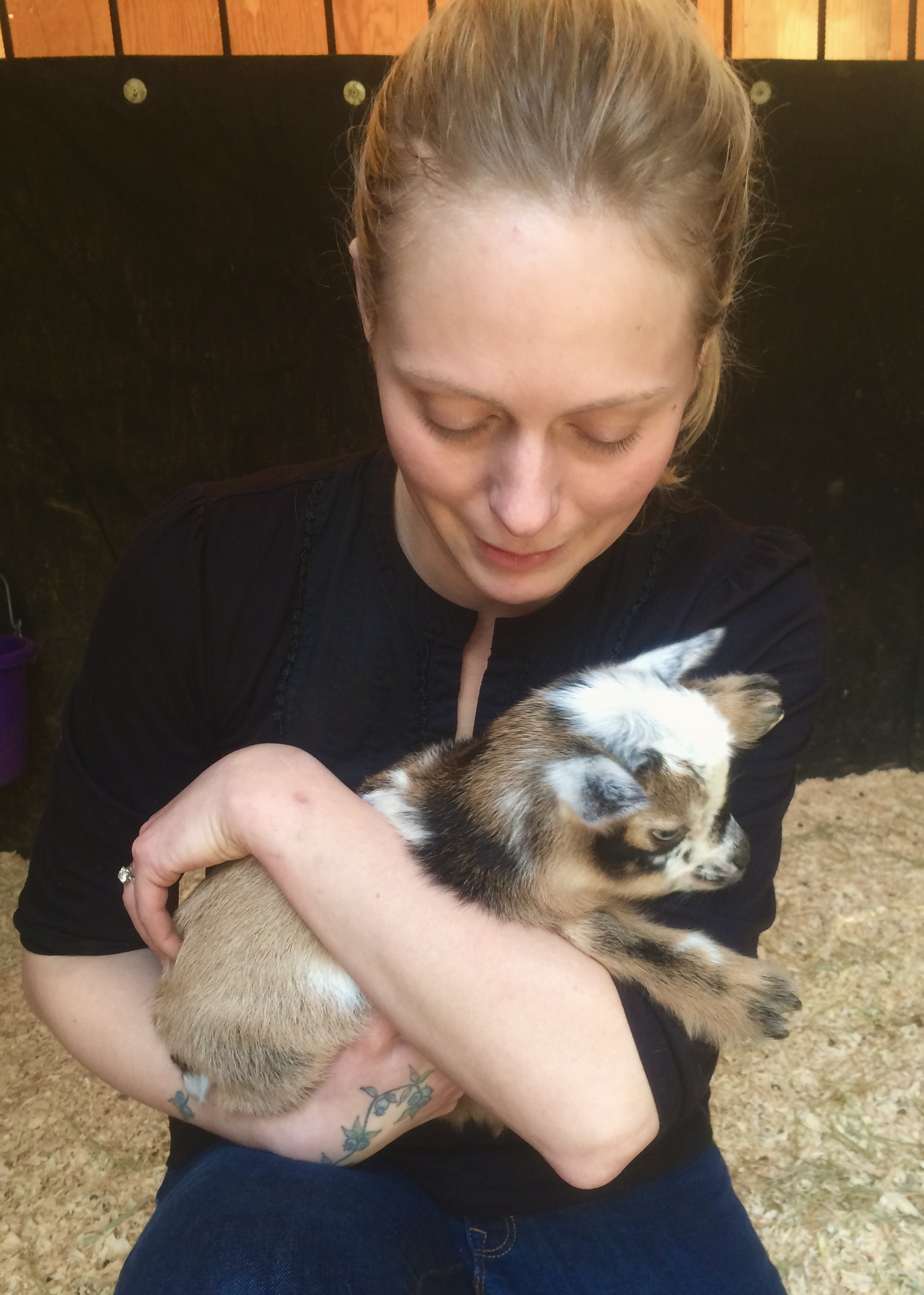 Nigerian Dwarf goats are wonderful for milking and companionship