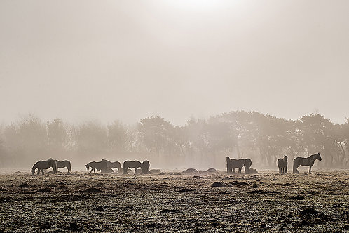 Ponies in the mist Fine Art Giclee Prints