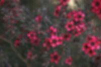 Qigong Yuan Gong Ren Xue Nelson Qi Totality Healing  health