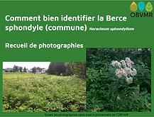 berce-id.png