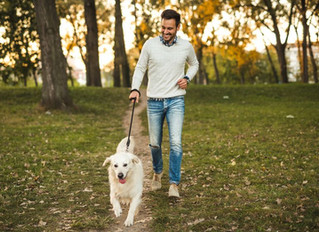 The Pleasure and Importance of Focused Dog Walking