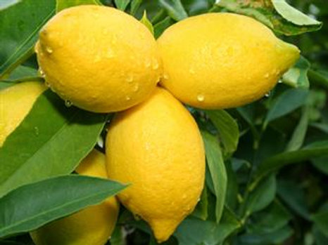 Whole Fruit Fused Lemon Olive Oil