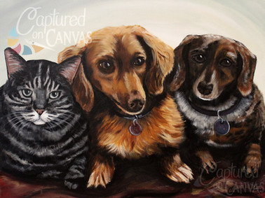 2Dogs and a Cat