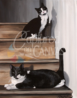 2 Cats Posed on Steps