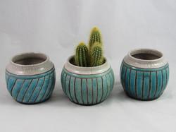 Pots Cactus