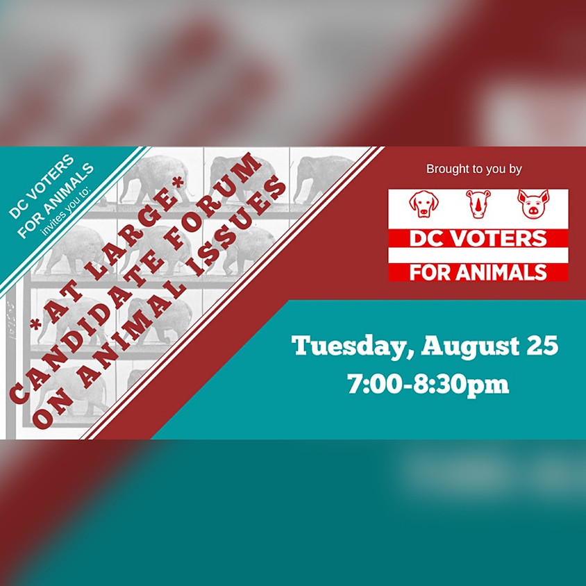 DC Voters for Animals Candidate Forum