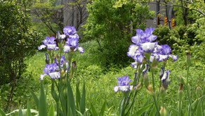 NEW: Self-guided garden tours!