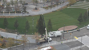 Holiday Tree arrives in The Square