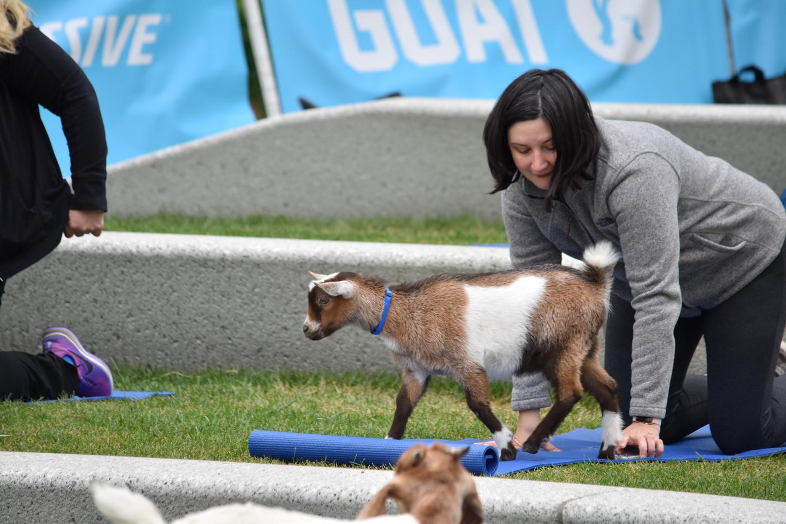 Goat Yoga in Cleveland Public Square