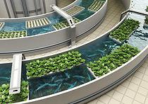 Aquaponic in Städten