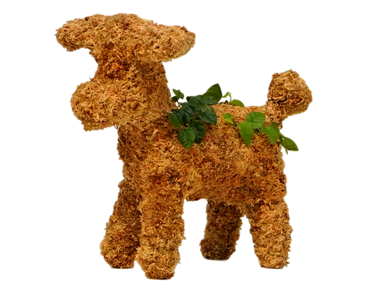 Small Poodle topiary planted; front view.