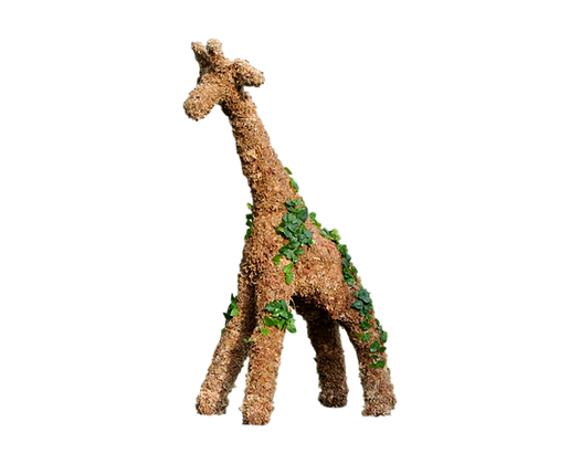 Large Giraffe topiary planted; front view.