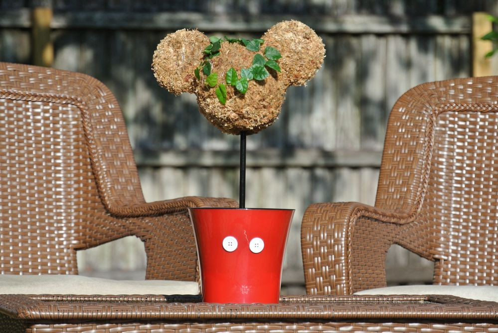 Mickey Head topiary sitting between two patio chairs on the coffee table.