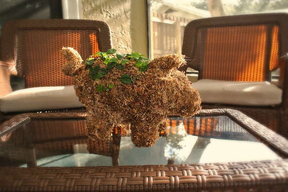Medium Pig topiary planted; table top setting.
