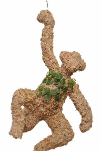Hanging Monkey Topiary - Planted