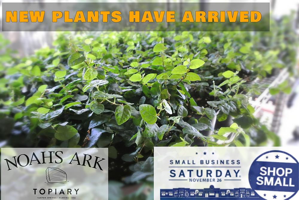 New Plants Have Arrived; Shop Our Topiaries