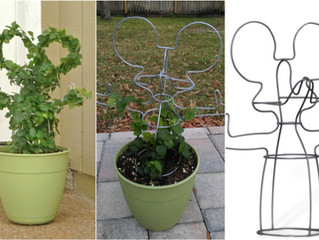 Topiary Frame; 2 examples for planting