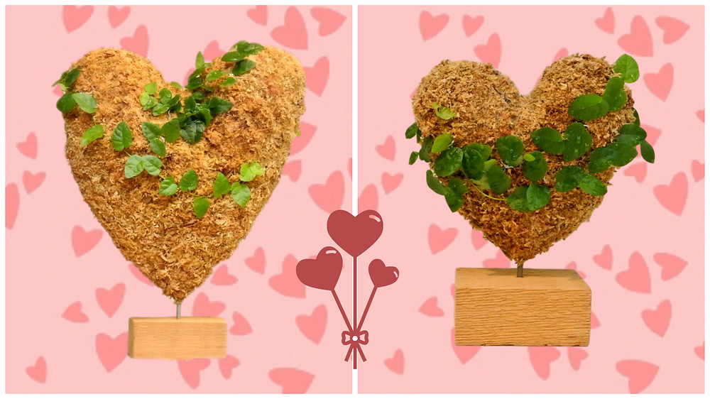 Large and Small Planted Heart Topiary