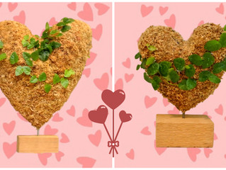 Give Our Topiary Hearts; Resident Hawk